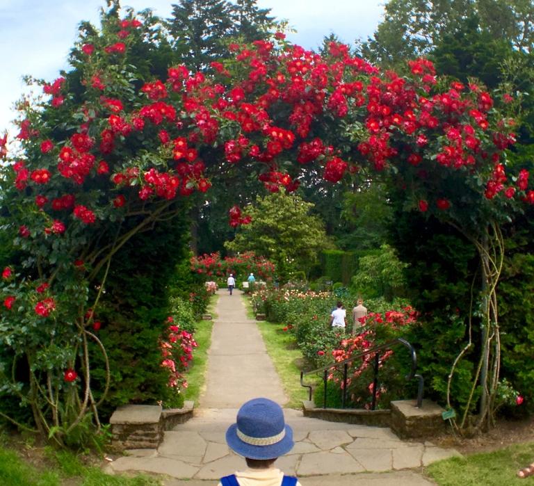 International Rose Test Garden11