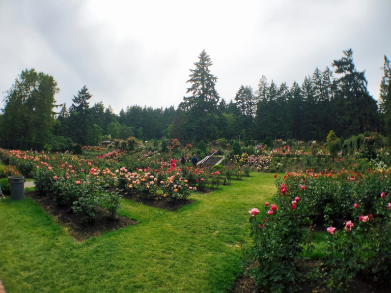International Rose Test Garden2