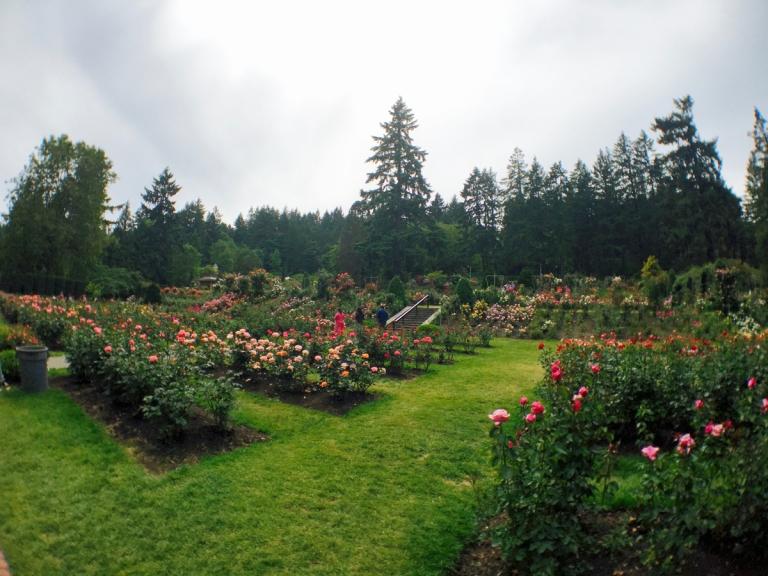 International Rose Test Garden2