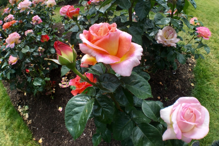 International Rose Test Garden4