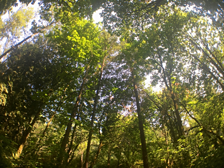 Tualatin Hills Nature Park - Oyako Portland4