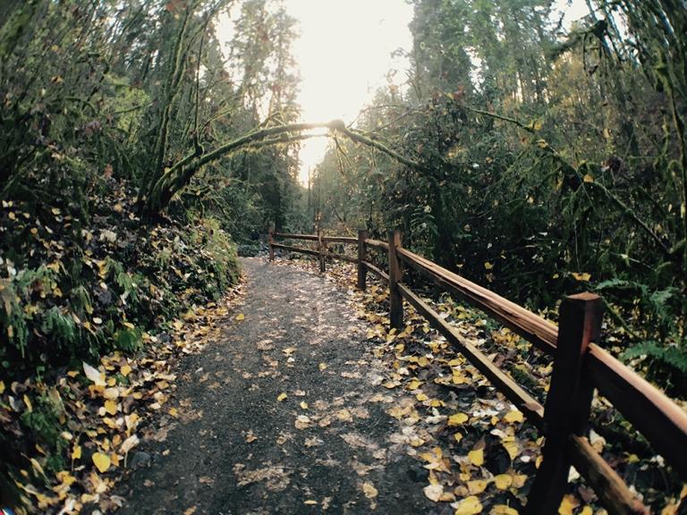 Lower Macleay Park – OYAKO PORTLAND14