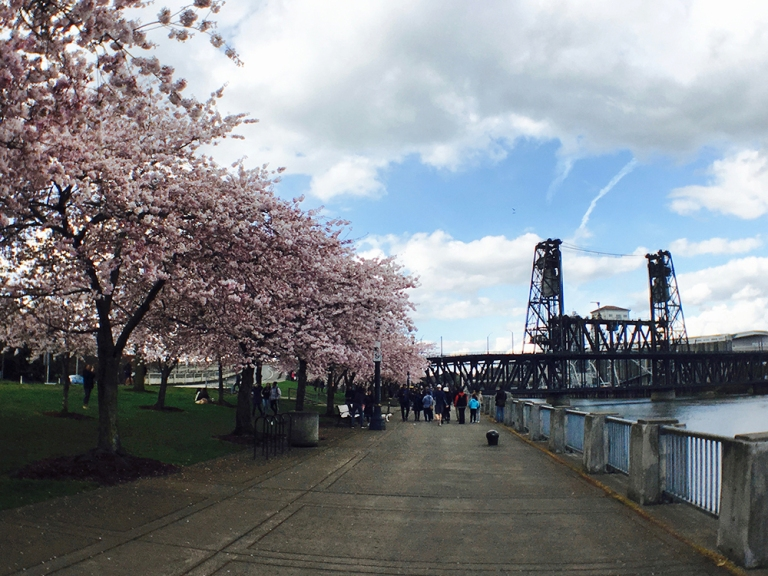 Cherry blossom trees at Waterfront Park in Portland - Oyako Portland4