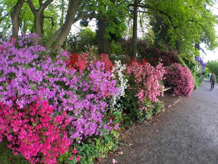 Crystal Springs Rhododendron Garden- Portland Oregon - Oyako Portland13
