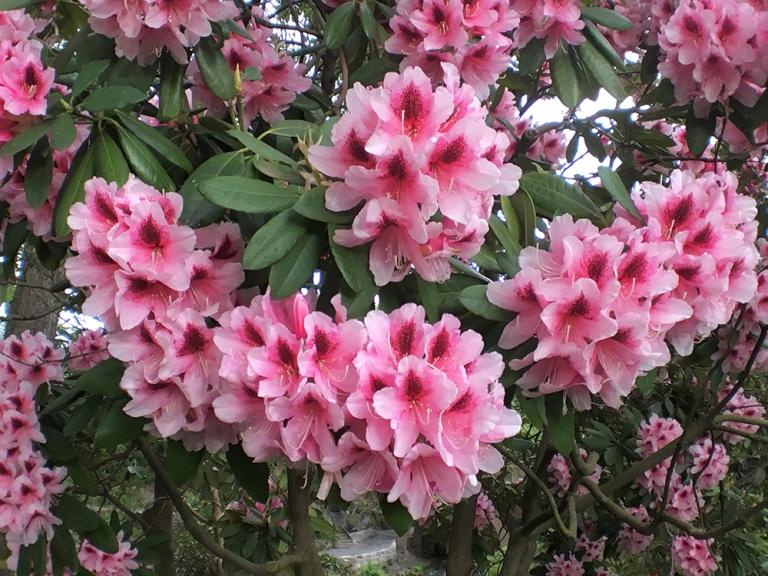 Crystal Springs Rhododendron Garden- Portland Oregon - Oyako Portland19