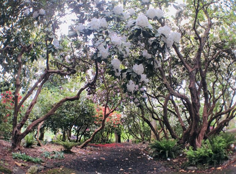 Crystal Springs Rhododendron Garden- Portland Oregon - Oyako Portland21