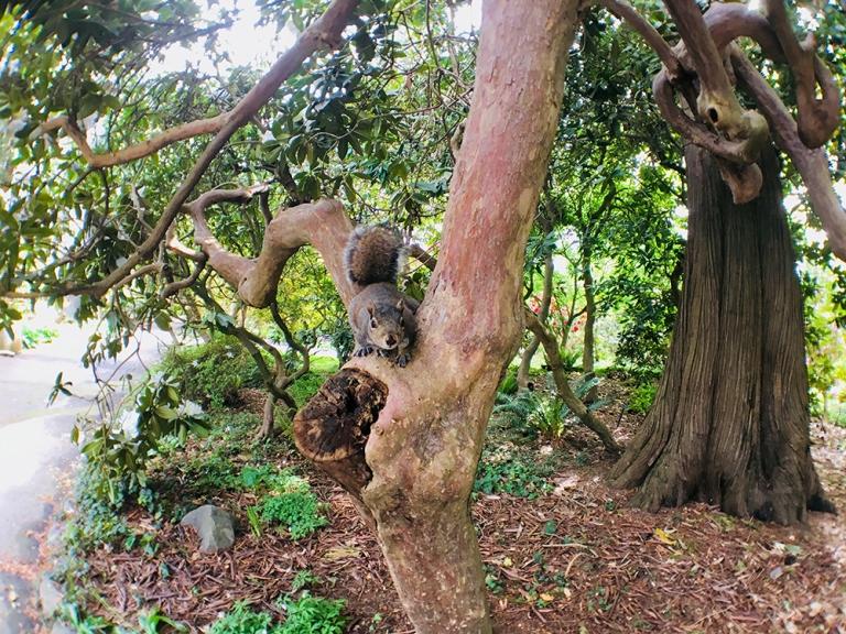 Crystal Springs Rhododendron Garden- Portland Oregon - Oyako Portland22