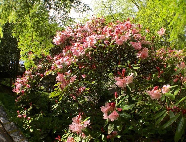Crystal Springs Rhododendron Garden- Portland Oregon - Oyako Portland4