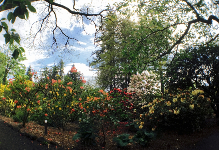 Crystal Springs Rhododendron Garden- Portland Oregon - Oyako Portland6