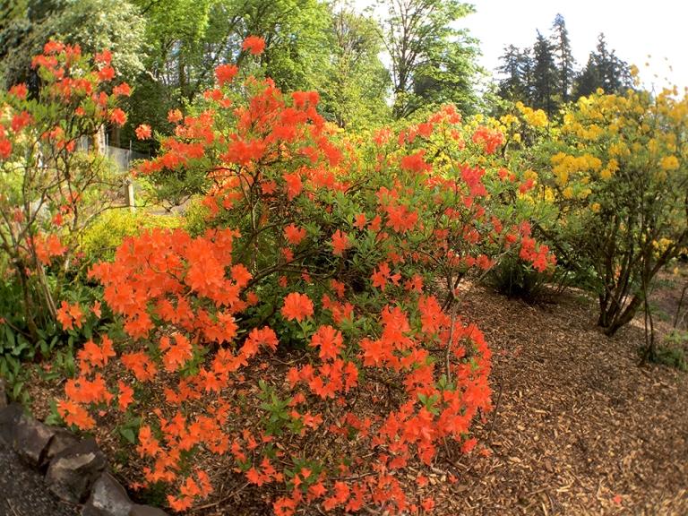 Crystal Springs Rhododendron Garden- Portland Oregon - Oyako Portland8