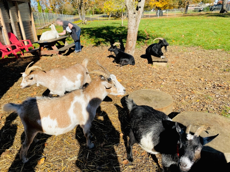 Belmont_Goats_Portland12.jpeg