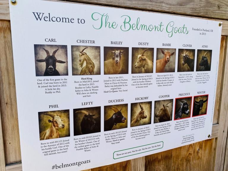 Belmont_Goats_Portland8.jpeg